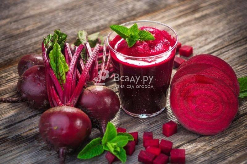 Вареная свекла: калорийность на 100 г, польза и вред красного овоща для организма и здоровья человека, пищевая ценность и соотношение бжу, и сколько в нем витаминов
