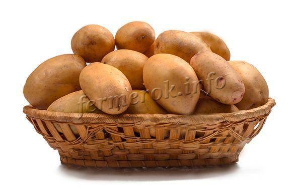 """Картофель """"крона"""": характеристика сорта, описание, фото и секреты выращивания"""
