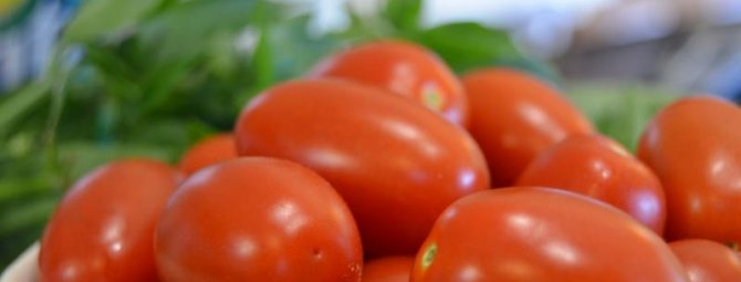Описание сорта томата волшебный каскад и его характеристики