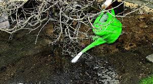 Все о сорта боярышника пауль скарлет: описание, агротехника, посадка и уход