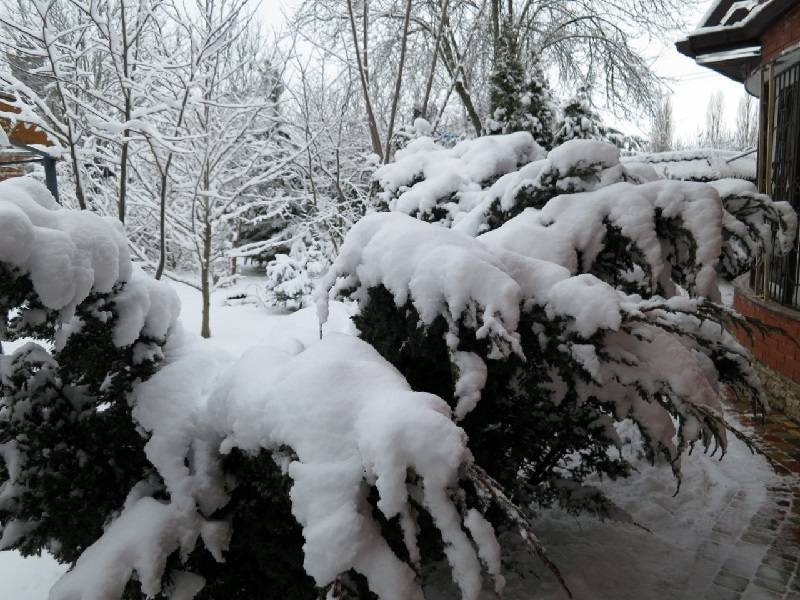 Как укрывать можжевельник на зиму — уход осенью, подготовка и укрытие кустарника от мороза