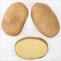 Все о сорте картофеля зорачка: описание и фото, характеристика, особенности выращивания и другие нюансы