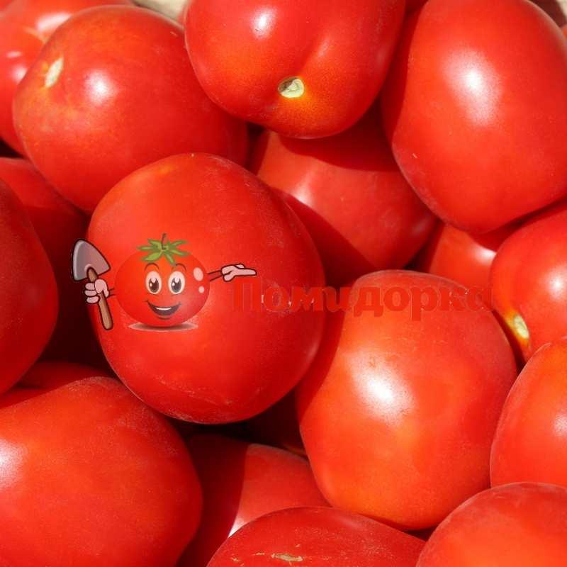 Швейцарский томат астерикс