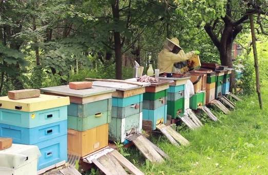 Лечение нозематоза у пчел
