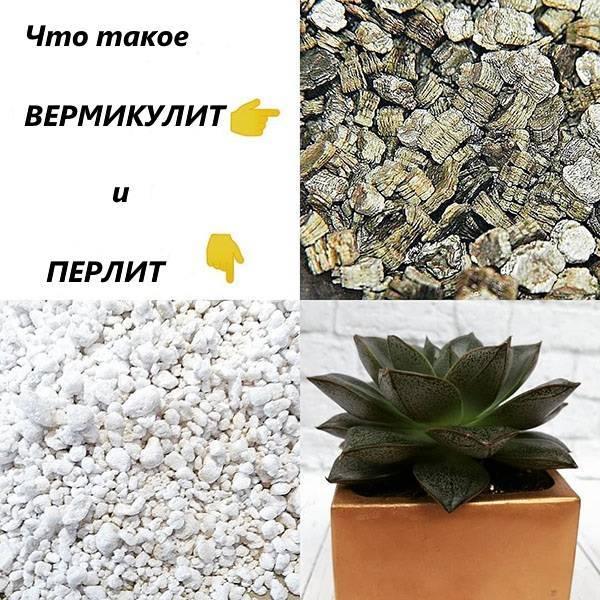 Вермикулит и перлит для растений – как применять, что лучше?