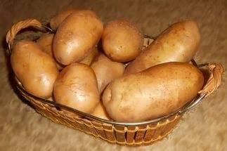 Популярный сорт: картофель «невский» описание, характеристики,  фото