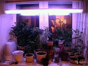 Какие лампы нужны для подсветки рассады