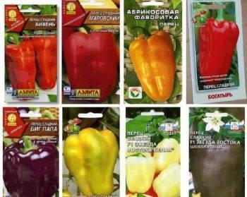 Лучшие сорта перцев для выращивания в теплицах в подмосковье
