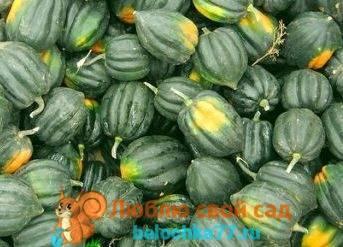 Самые лучшие сорта тыквы для открытого грунта: выбор по видам и региону выращивания