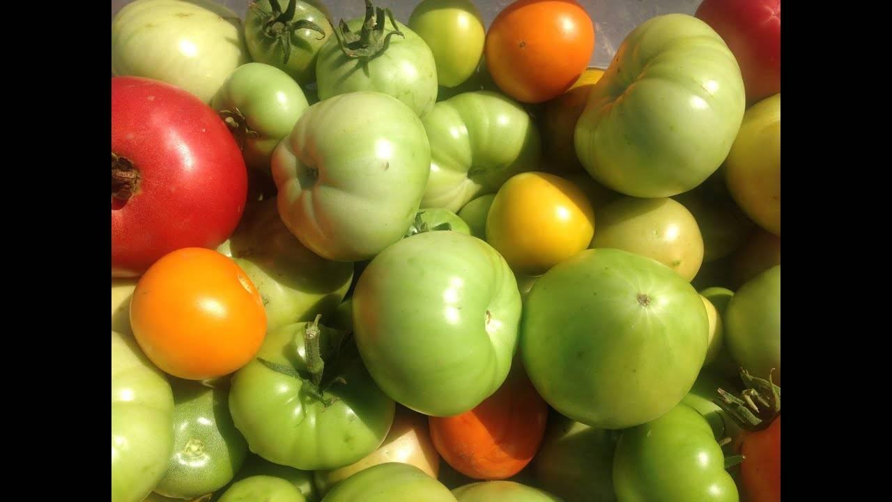 Где хранить помидоры чтобы покраснели