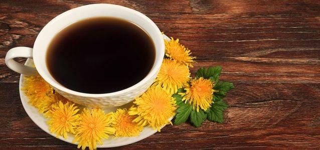 Одуванчик: лечебные свойства и применение – рецепты