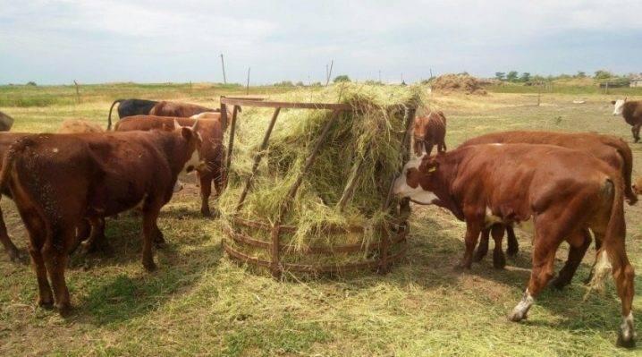 Беспривязное и привязное содержание коров – преимущества разведения крс 2020