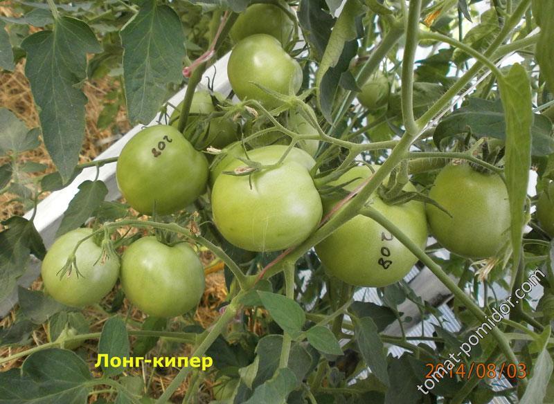 Томат Лонг Кипер: отзывы, фото, урожайность
