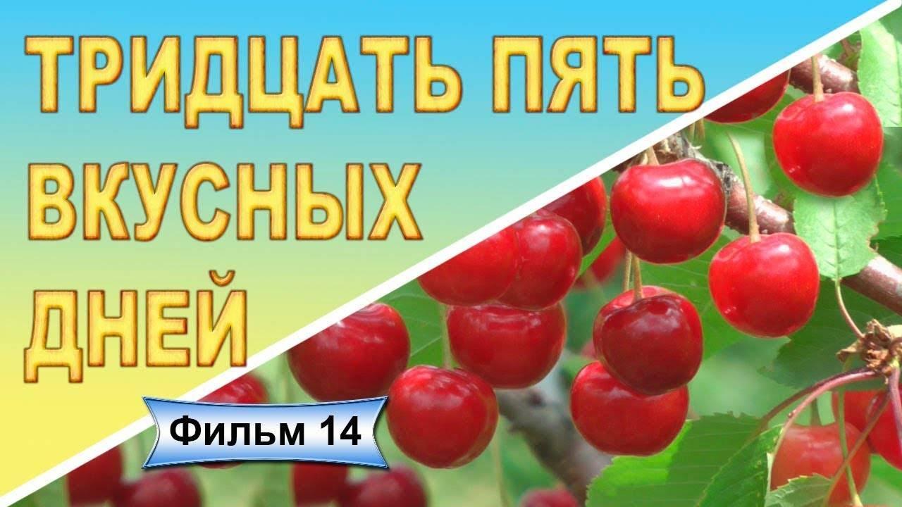 Сорт черешни «василиса»: характеристика, секреты успешного выращивания