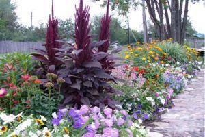 Миксбордеры в ландшафтном дизайне: интересные схемы с названиями цветов и фото