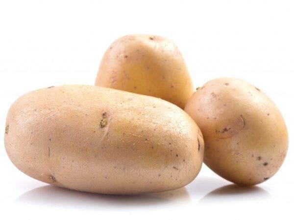 Выращивание картофеля: технология возделывания, условия посадки, тонкости ухода за овощем в открытом грунте и теплице, а также советы, как получить хороший урожай