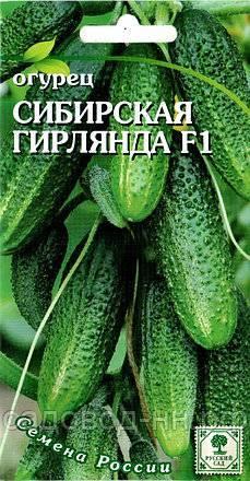 Лучший из пучковых гибридов – огурец сибирская гирлянда f1