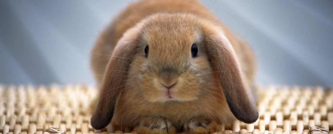 Что едят кролики: правила кормления и рацион