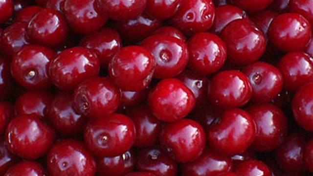 Вишня болотовская отзывы. купить саженцы вишни болотовская