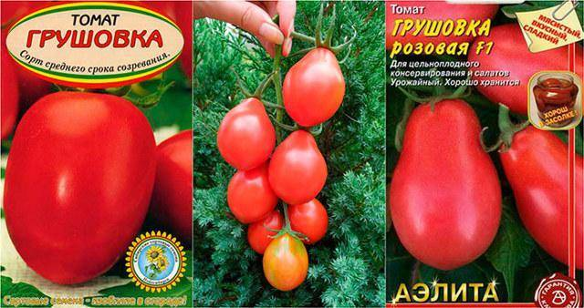 Красный, перцевидный томат «московская грушовка» — описание, выращивание, применение