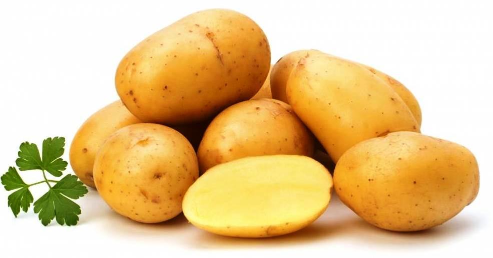 Сорт картофеля ред фэнтези: описание и характеристика, выращивание