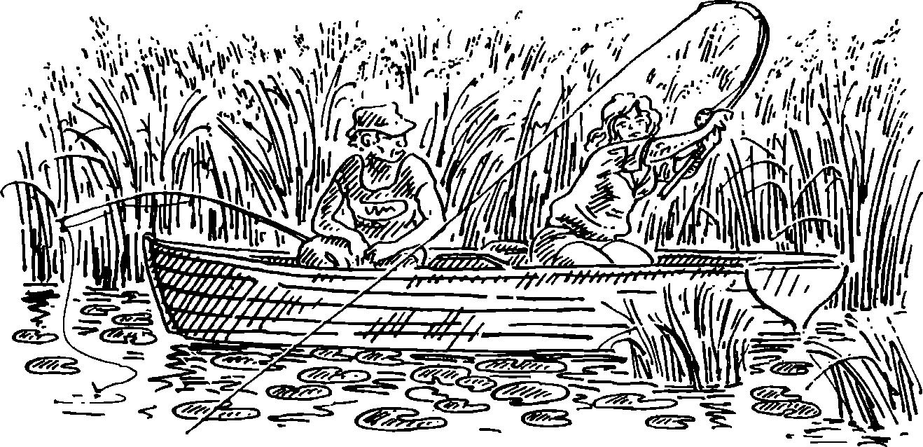 Характерное описание канадской сизой ели коника, посадка и уход