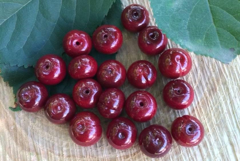 Урожайный сорт вишни малышка