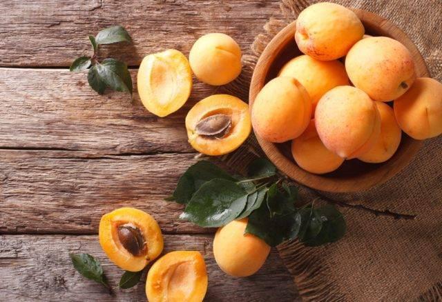 Обзор популярных сортов абрикоса