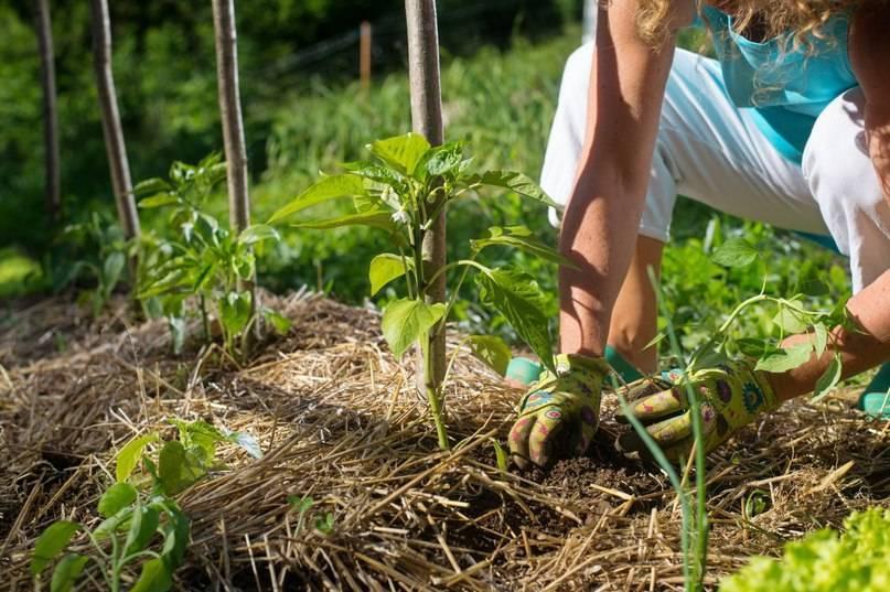 Чем засеять огород, чтобы земля отдохнула и не росли сорняки