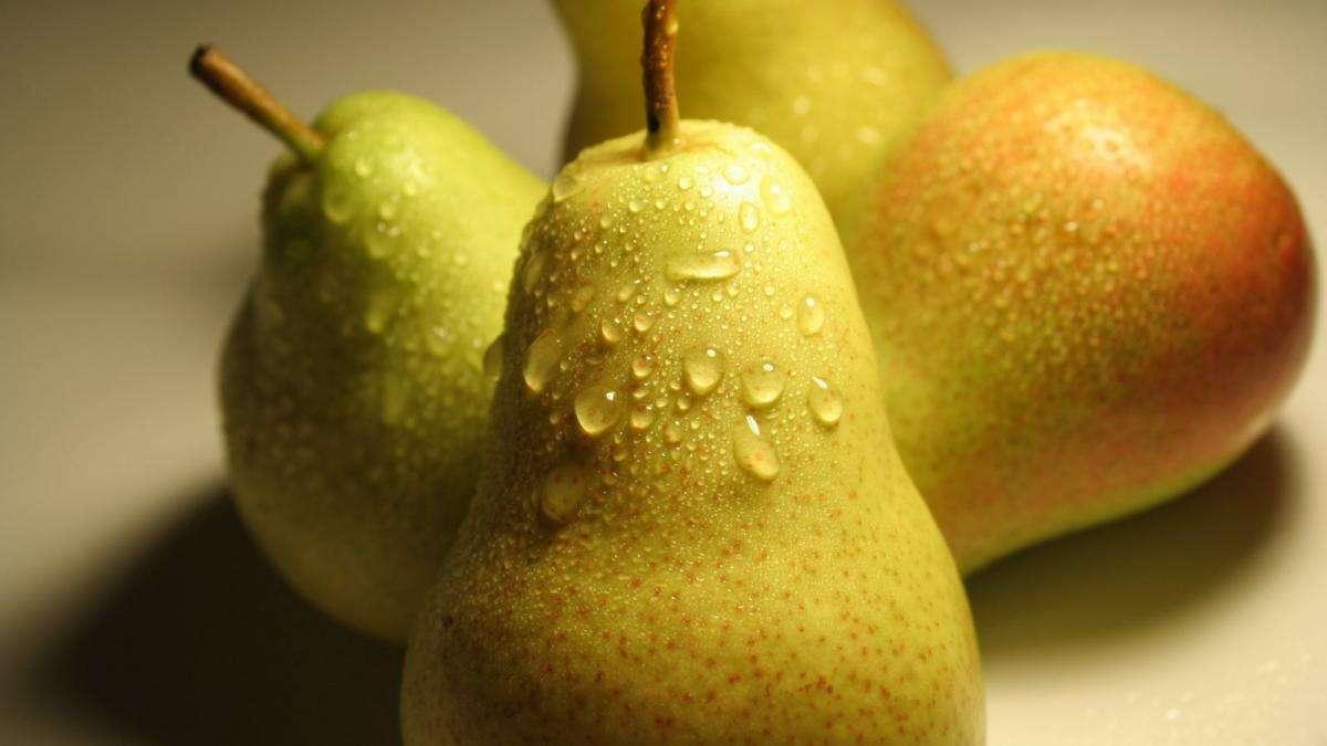 Китайская груша - польза и вред. китайская груша: польза и вред для организма, противопоказания