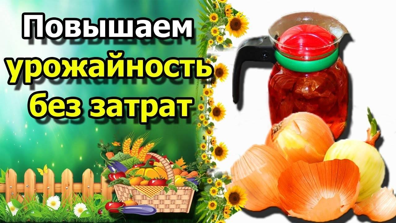 Бабушкин метод: как применять луковую шелуху на огороде: осенью, летом, весной
