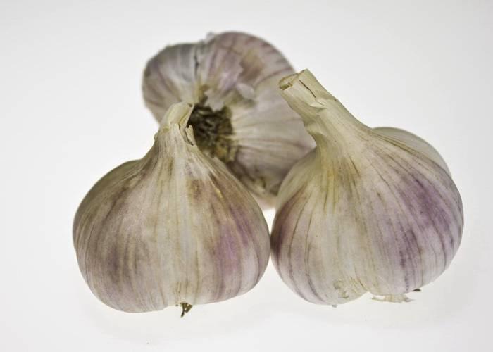 Чеснок парус: описание и характеристика сорта, выращивание и уход с фото