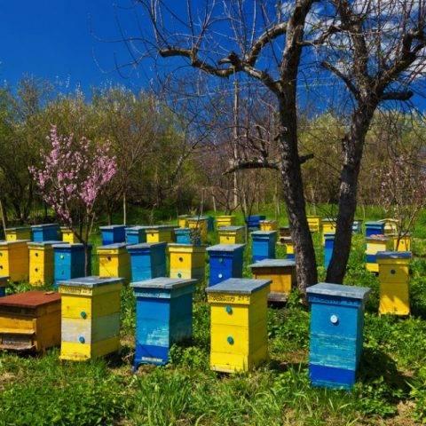 Экопол (полоски): инструкция по применению для пчел, состав, отзывы