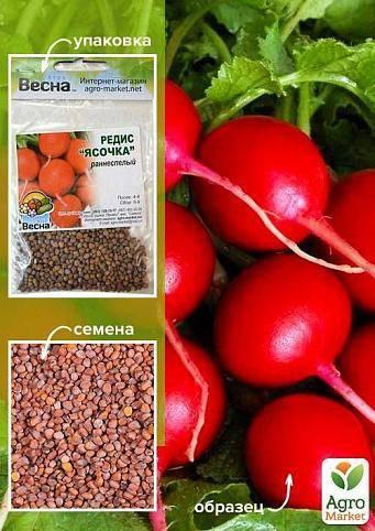 Нуждается ли редиска в удобрении? чем ее подкормить для быстрого роста корнеплода?