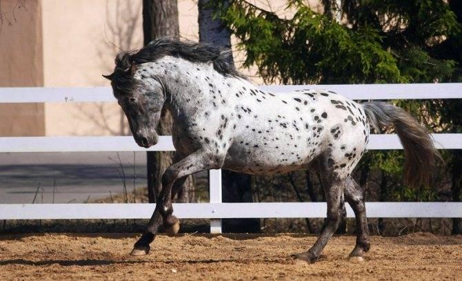 Терская лошадь — википедия переиздание // wiki 2
