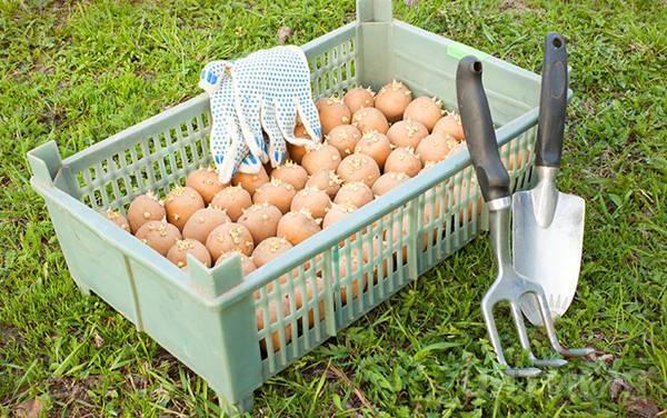 Как использовать командор для обработки картофеля и других культур