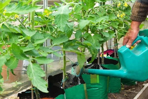 Как подкормить дрожжами растения в саду, огороде и цветнике
