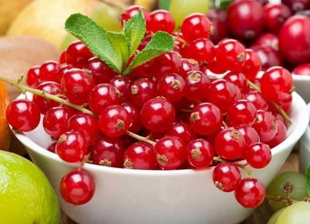 Красная смородина сахарная: описание сорта, фото, отзывы, правила по уходу