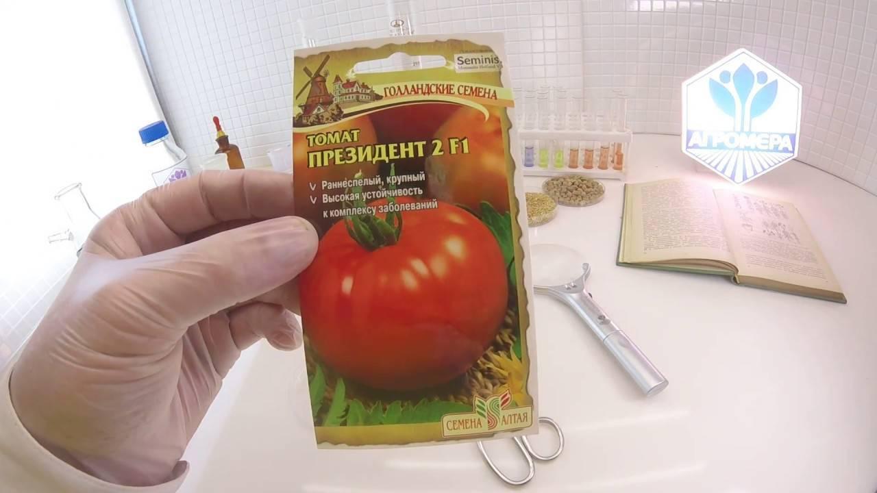 Ранние салатные томаты президент и президент 2