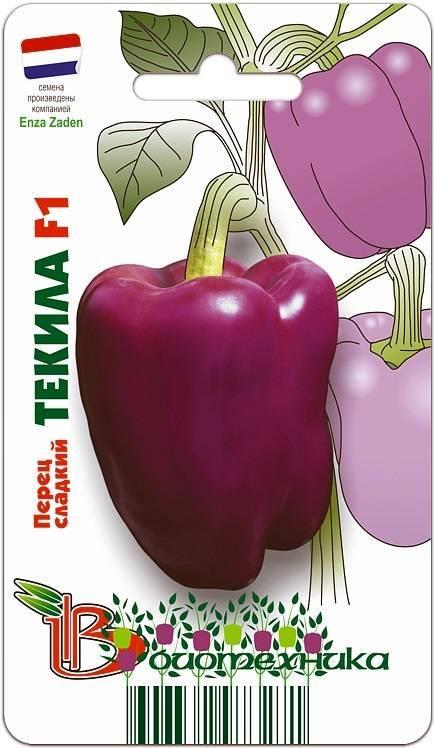 Раннеспелый перец кубович f1 – сочная мякоть крупных плодов — делимся опытом
