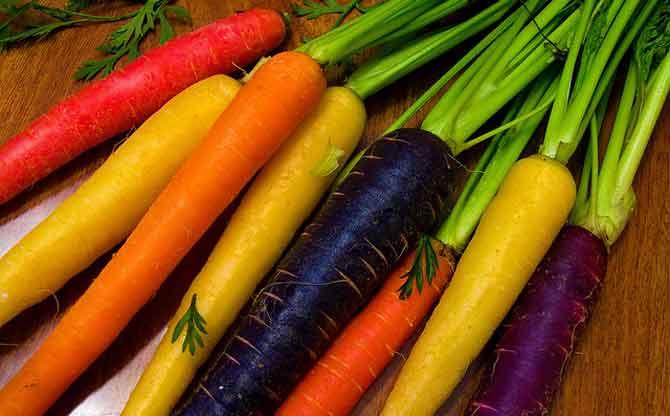Сорта моркови устойчивые к морковной мухе - перечень и описание сортов