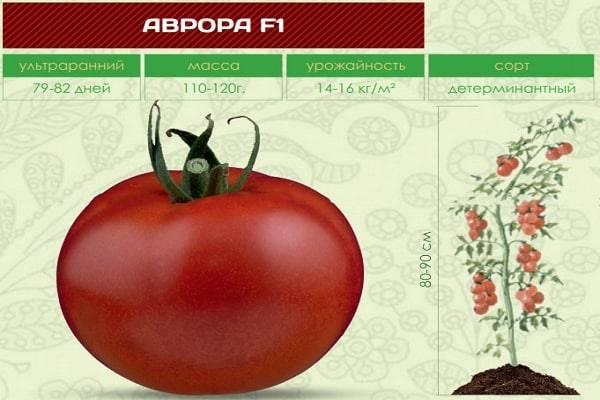Гибрид томата «аврора f1» — ранние сроки созревания и высокая урожайность