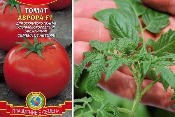 Помидоры  томат.