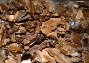 Как использовать перепонки грецкого ореха: полезные свойства и противопоказания