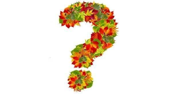 Чем засеять участок от сорняков осенью. чем лучше засеять огород осенью после сбора урожая