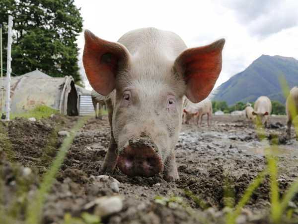 Разведение животных как бизнес: рентабельность и особенности процесса