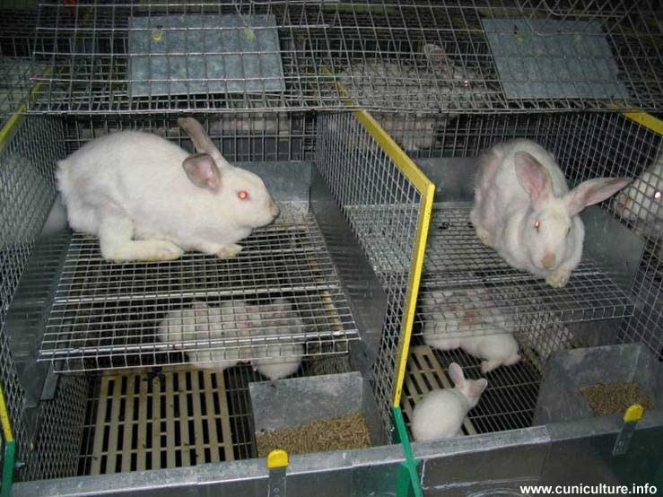 Клетка для кроликов своими руками: пошаговое руководство по строительству разных клеток