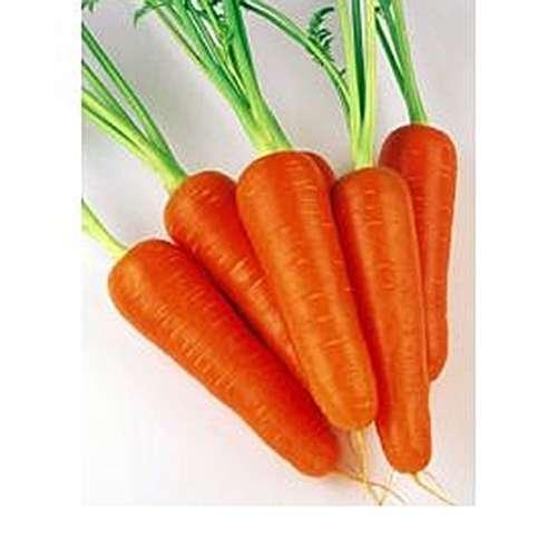 Морковь, сорт абако f1.