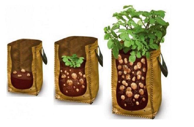 Как вырастить картошку в мешках: выбор сорта, посадка, технология выращивания, отзывы