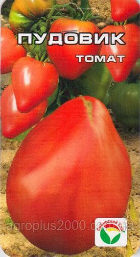 Описание и характеристика сорта помидоров севрюга(пудовик)